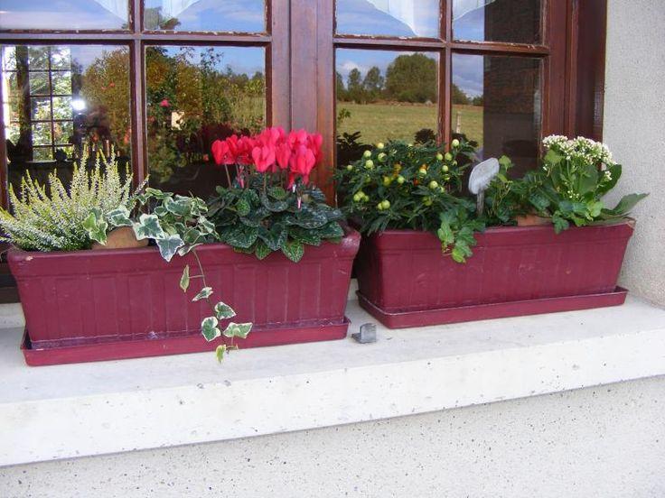 Deco Automne Romantique Bruyere Erica : Ideas about fleurs pour jardinière on planters