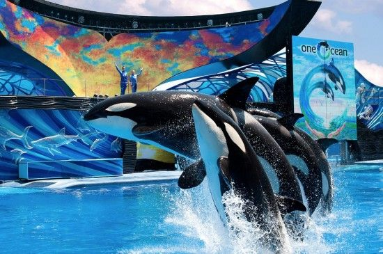 seaworld san antonio, great day trip with friends or family...