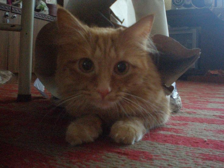 It's my kitty Denis.