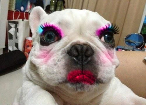Image result for Can You Put Makeup on a Dog?