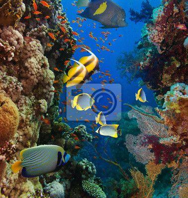 Fototapeta Koral i ryb
