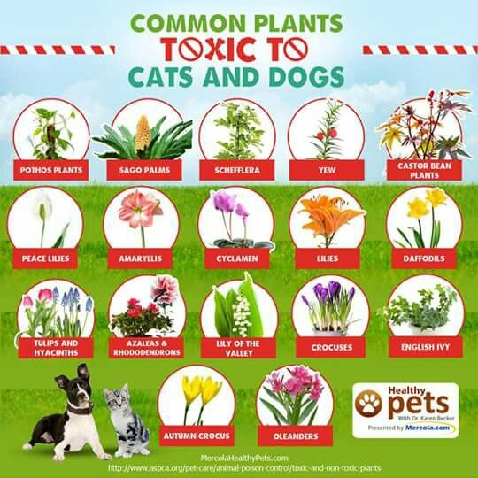 17 best images about cat and dog care on pinterest dangerous foods for dogs itchy dog and for. Black Bedroom Furniture Sets. Home Design Ideas
