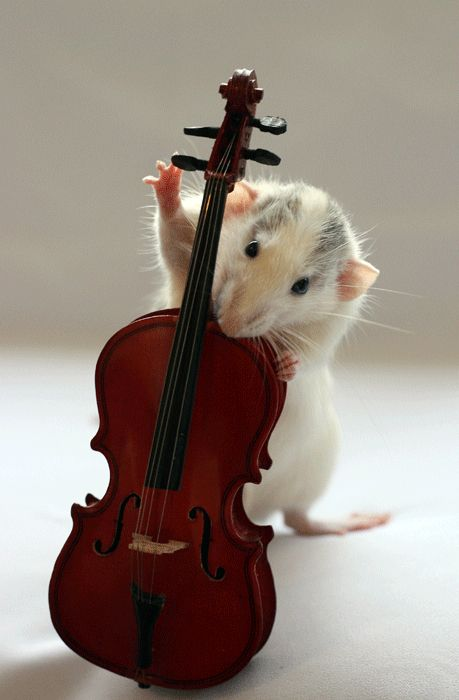 A rat playing cello:)