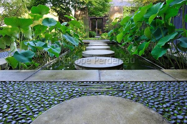 pas japonais sur un bassin planté de nelumbo alba (lotus sacré)  stepping stone across pond planted with nelumbo alba  http://perdereau.photoshelter.com/image/I0000hYkD4iMDWnM.