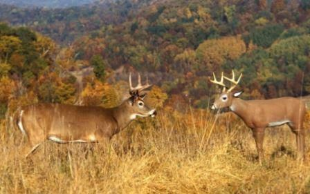 7 Secrets to Using Deer Decoys Effectively - By Judd Cooney. If decoys don't work for you, you probably haven't tried these deer hunting strategies!