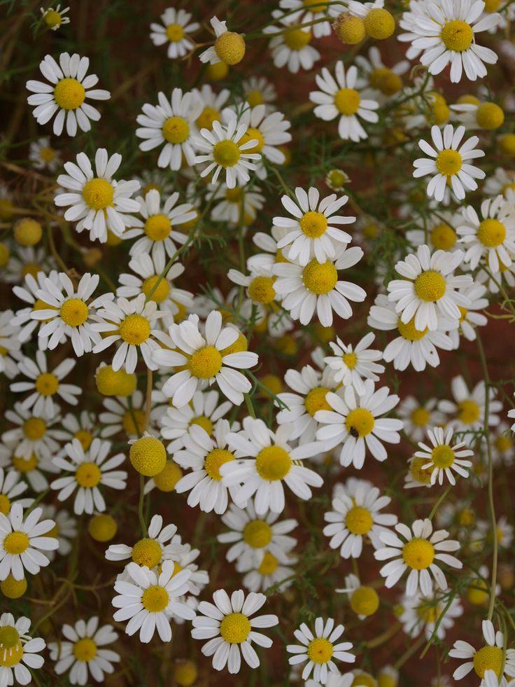 #bylinkove panstvi #zamek #zahrada #radost #bylinky #netradicniakce #bylinky #park #hermanek