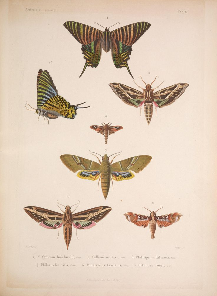 cuban butterflies: Art Inspiration, Book Illustrations, Of Cuba, Photo, Winged Insects