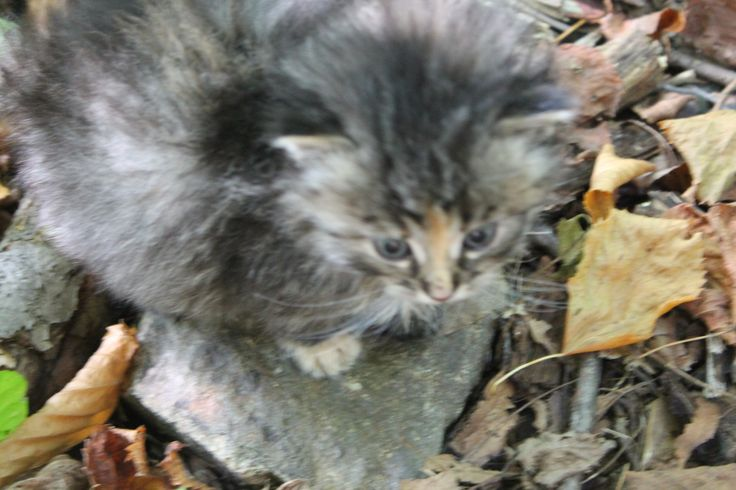 Kočička Nature,...