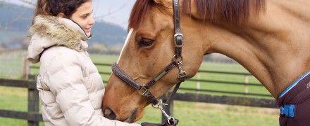 Érdekes cikkek lovastémában a blogunkon!