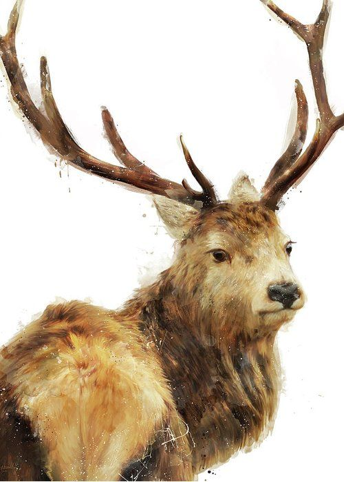 Winter Red Deer Greeting Card For By Amy Hamilton Christmas Cards