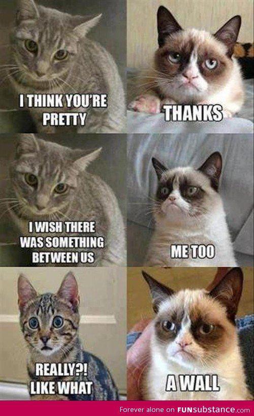 grumpy cat - Google zoeken