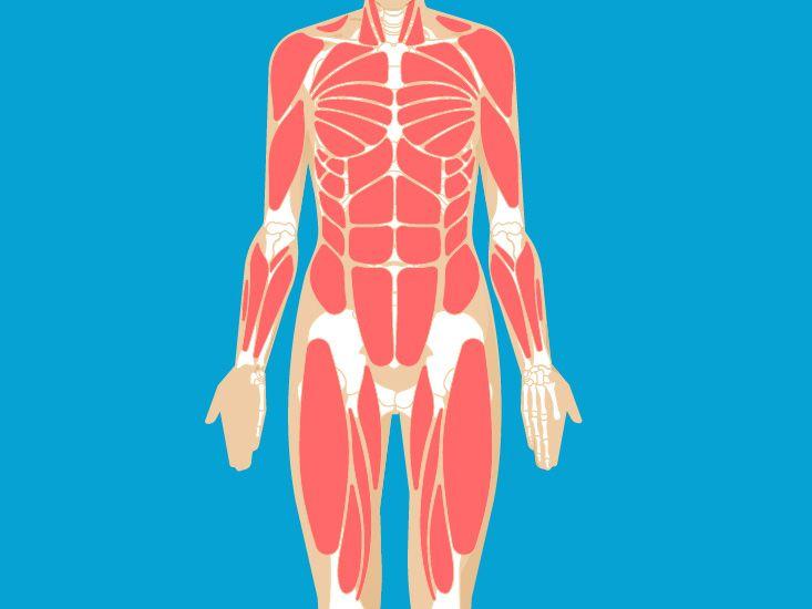 Infraspinatous Muscle Origin Function Anatomy Primary Jobs