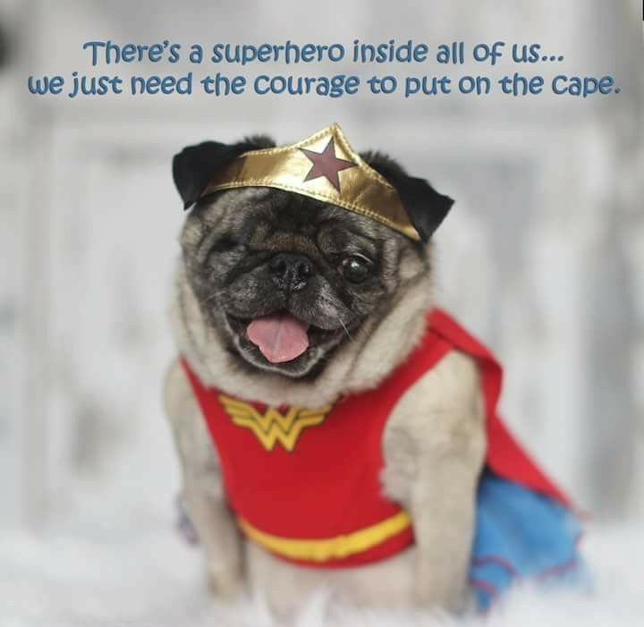 Pin By Ari K On Pugs Pug Quotes Pugs Kisses Dogs