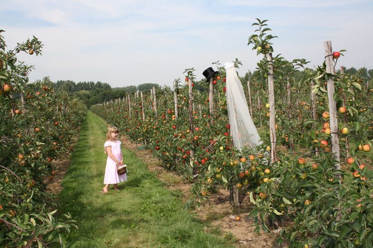 Bruidsmeisje in de Betuwe