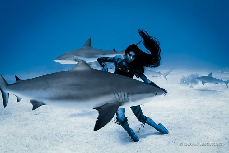The Mermaid Speaks: Why You Need to Take a Stand to Help End the Australian Shark Cull [PETITION]