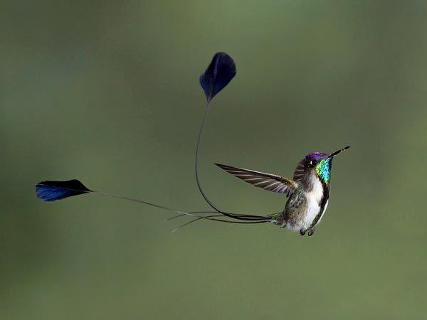 Le più belle foto di uccelli per il World Bird Photo Contest