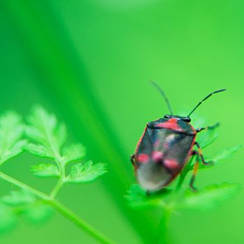 Garden pests are found in every garden, but the key is to keep them under control so that they don't ruin plants and flowers. Learn how to repel and eradicate them here. #MakeitwithMica #Insects #Pest #Garden #Protection