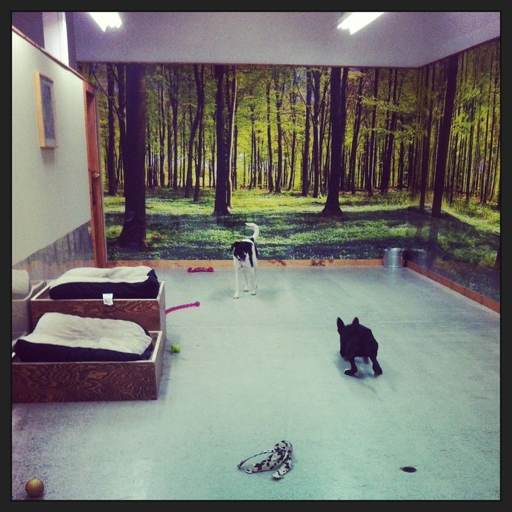 """I like this setup for a water area, shallow """"doggy pool"""
