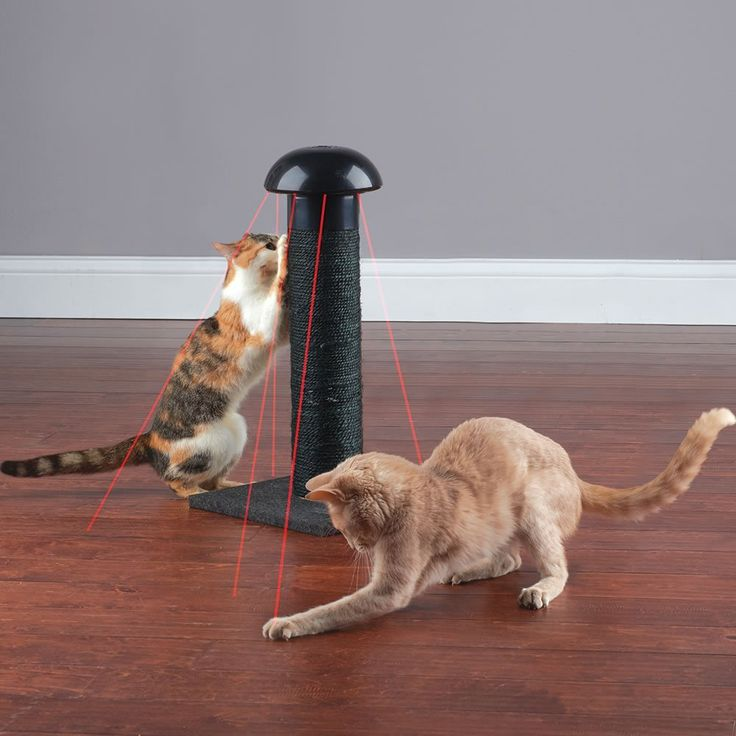 This is the scratch post that satisfies a feline's instincts to scratch and hunt, while simultaneously fulfilling its owner's need for entertainment. The device projects a red laser dot that darts across a floor in unpredictable patterns, inciting even indifferent felines to engage in perpetual play. The selectable four-speed laser turns rapidly, stops unexpectedly, and races in opposite directions, triggering a cat's instinctual attraction to quickly moving objects. The laser toy is…