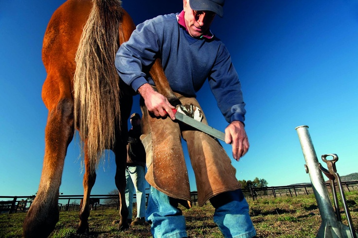 """Historic """"Burrundulla"""" on the outskirts of burgeoning Mudgee, NSW, has been in the same family for nearly 180 years, with today's custodians diversifying the cattle and sheep property into crops and vines."""