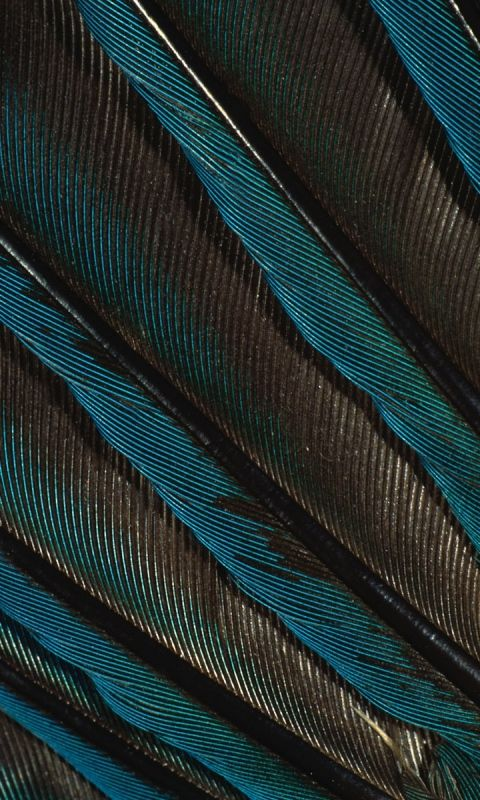 480x800 Wallpaper feathers, peacock, background, dark