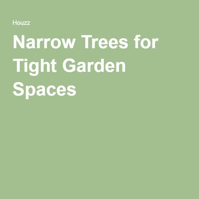 13 best great plants images on pinterest landscaping for Trees for tight spaces