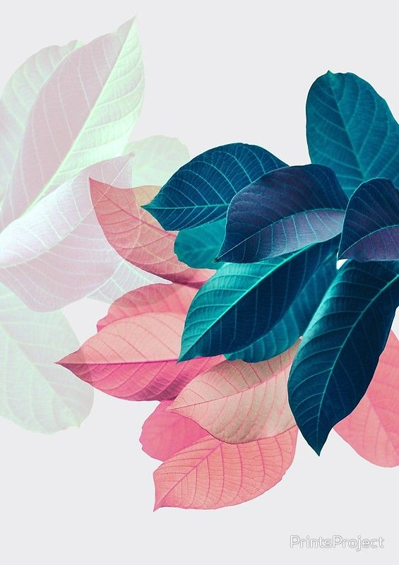 Blue Pink Plant Leaf Art Print By Printsproject Plants