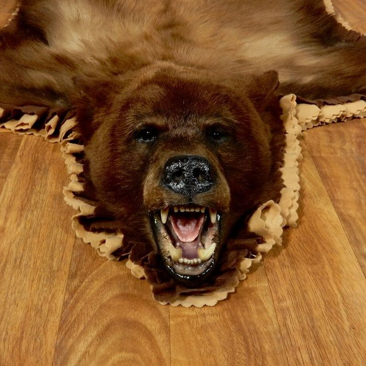 Black Bear Full-Size Rug For Sale #17255 @ The Taxidermy Store