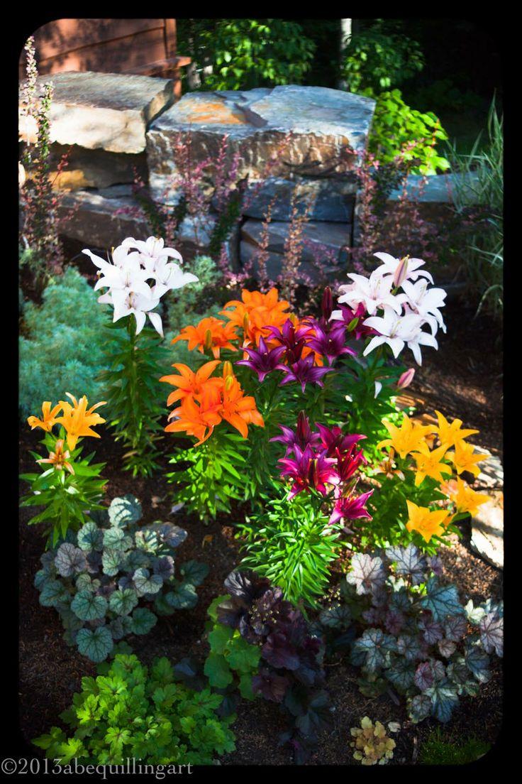 220 besten Lily Garden Bilder auf Pinterest