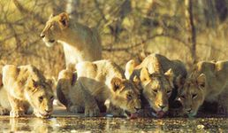 4 Nights Wildlife Package