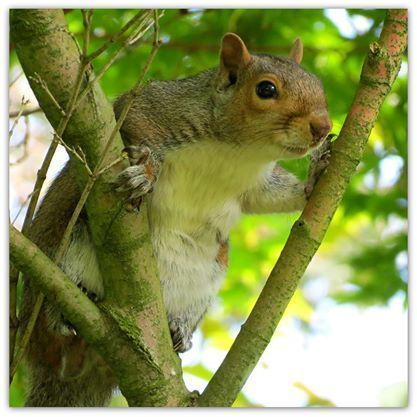 Squirrel.  A photographic card left blank for your own message.  Summer.