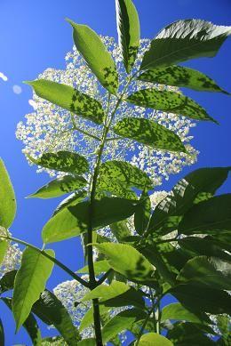 Se soigner avec les plantes médicinales, c'est un mode de vie. C'est apprendre à connaître ses alliées quotidiennes et ses propres limites dans la gestion de sa santé. Dans cette optique, il ne faut pas attendre d'être très malade pour se soigner mais plutôt choisir la ou les plantes qui aident à rétablir les déséquilibres …