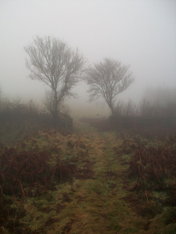 Roam the misty English moors but take care you don't fall prey to any descendents of the Hounds of Baskerville !