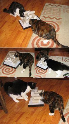 DIY cat toy made out of toilet paper rolls;  Isabelle would LOVE this!!!