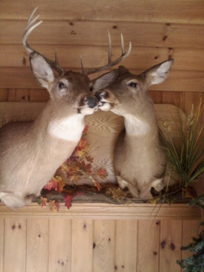haha i love this.: Future Houses, Deer Cabins Decor, Deer Head, Deer Hunt'S Ideas, Deer Hunt'S Houses Decor, Deer Hunt'S Decor, Girls Deer Mount, Deer Mount Decor, Country Hunt'S Deer Bedrooms