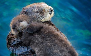 20 zajímavostí ze života zvířat   Spousta zvířat dokáže udělat věci, které bychom od nich někdy vůbec nečekali. Některá jejich gesta a jednání jsou vtipná a jiná třeba romantická či velice podobná tomu, jak by reagoval člověk.