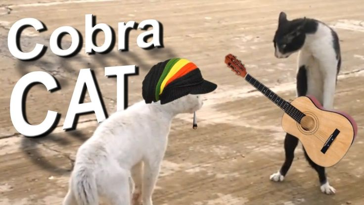 COBRA CAT (french version)