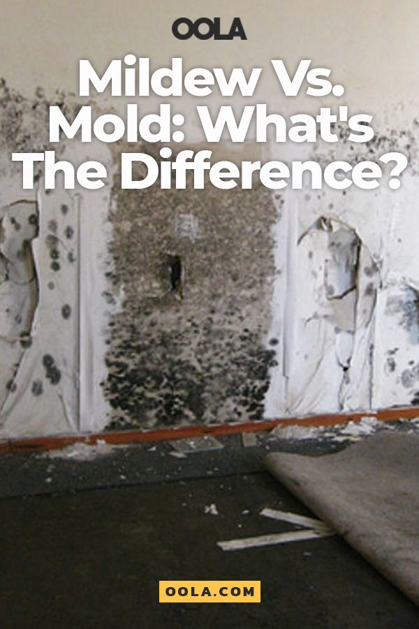 The Difference Between Mildew And Mold Explained