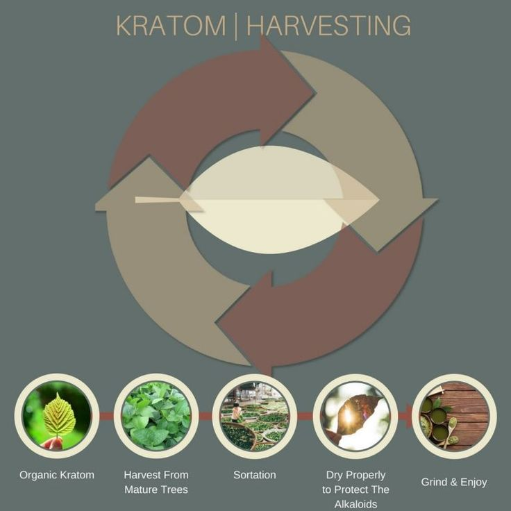This natural beauty needs a lot of sunlight and mineral-rich water. Kratom trees are not like an apple tree where handling the apples is plain simple. It requires trained farmers who know the kratom leaves inside out. Do you want corrupt farmers and vendors that handle your kratom? Many of them are out there chopping leafs solely to make a buck. Not only kratom, but other natural health products are wicked these days.