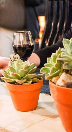 Succulents, Echeviera in terracotta pots as wedding favours.