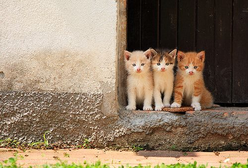 sistersAnimal Attraction, Sisters With, Sisters Siste, Cat I Tud, Animals Cat, Kittens, Blog, Kitty, Pandas