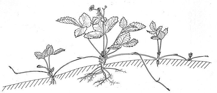 Best 25+ Vegetative reproduction ideas on Pinterest
