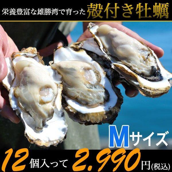 三陸石巻雄勝の浜でとれたプリプリの牡蠣を味わう!       殻付き牡蠣(Mサイズ:150~200g) 12個~かき/カキ/産地直送