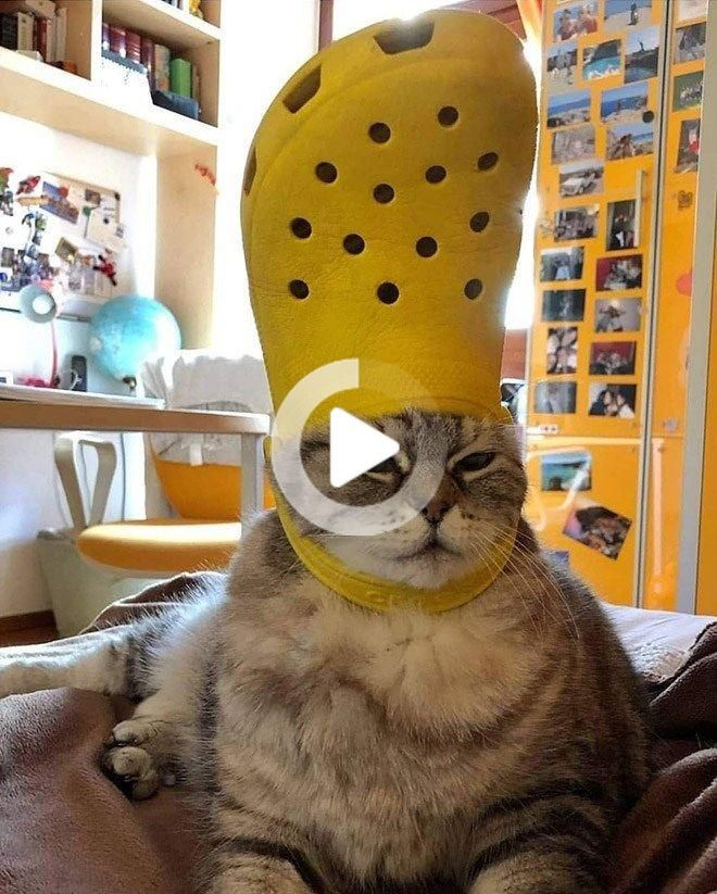 His Holiness The Pope Pets With Crocs Hats Cats Cat Memes Caturday