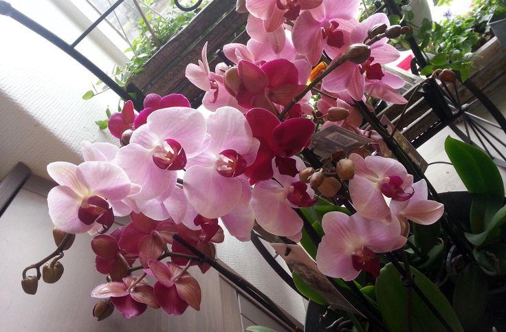 Kukkakauppa Kukkahuone Meritorni paikassa Kotka, Kymenlaakson maakunta