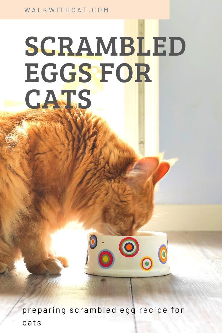 Make Scrambled Eggs For Cats Kitten Food Healthy Cat Food Cat Parenting