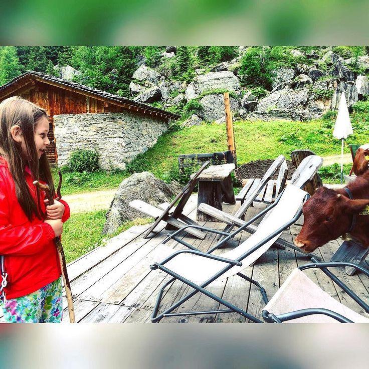 #incontriravvicinati del terzo tipo!! Due vitellini sono venuti a salutarci mentre facevamo #pausapranzo al rifugio ... si sono anche fatti accarezzare  #cuccioli !!! #heidi moments  #instamoments #instatravel #trekking #travellife #traveldiaries #travel #nature #instanature #cow #mucca #montagna #mountain #mountainlife #sudtirol #südtirol #instatrentino