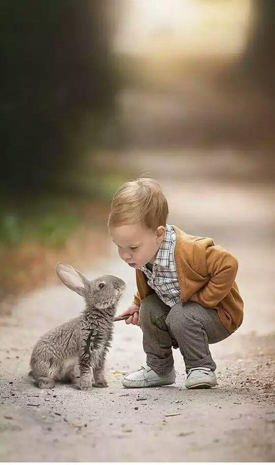 New animal love images hd,animal love image download,animals love wallpaper, animal ... 3