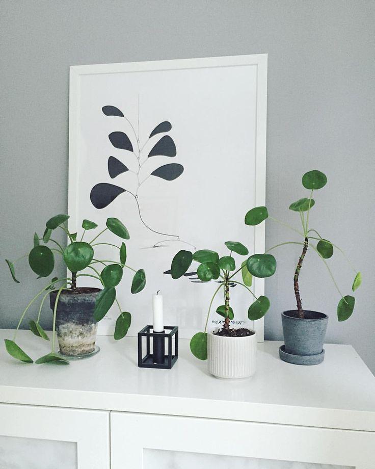 144 best pilea images on pinterest indoor house plants green plants and indoor plants. Black Bedroom Furniture Sets. Home Design Ideas