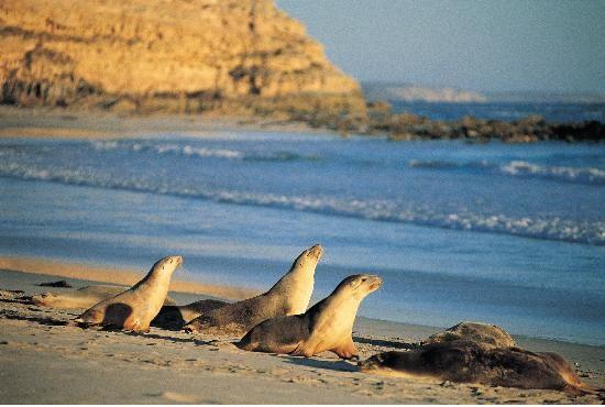 Seal Bay, #Kangaroo Island #Australia